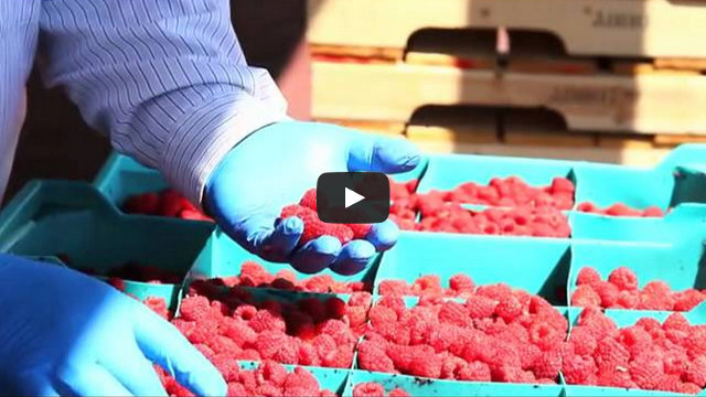 Processed Raspberries Video