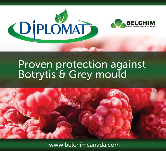 Diplomat Belchim Crop Protection Canada